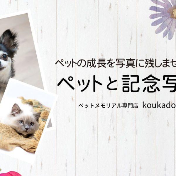 ペットメモリアル専門店koukadou「ペットと記念写真」イベント開催